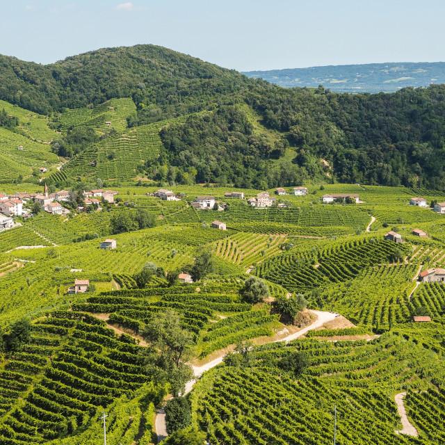 """""""Prosecco wineyards in Valdobbiadene town"""" stock image"""