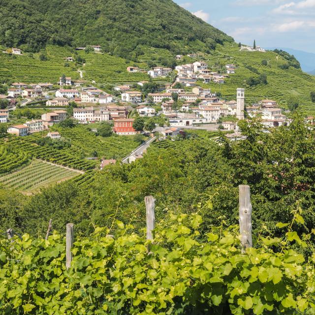 """""""Valdobbiadene hills and Prosecco vineyards in Veneto"""" stock image"""