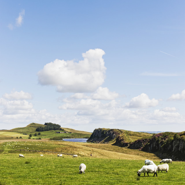"""""""Crag Lough on the Roman or Hadrian's Wall"""" stock image"""