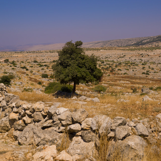 """""""Landscape In Refade, Syria"""" stock image"""