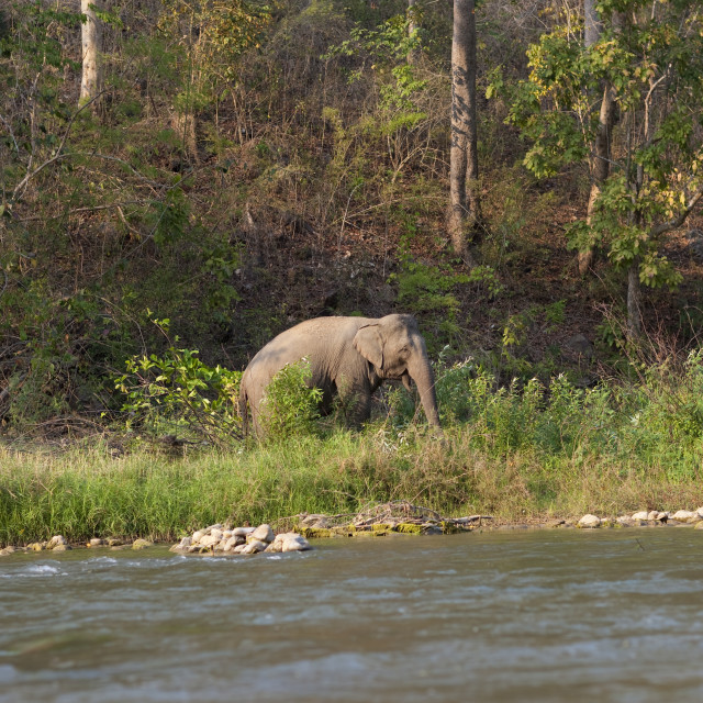 """""""Elephant in nam peang din village, North thailand"""" stock image"""
