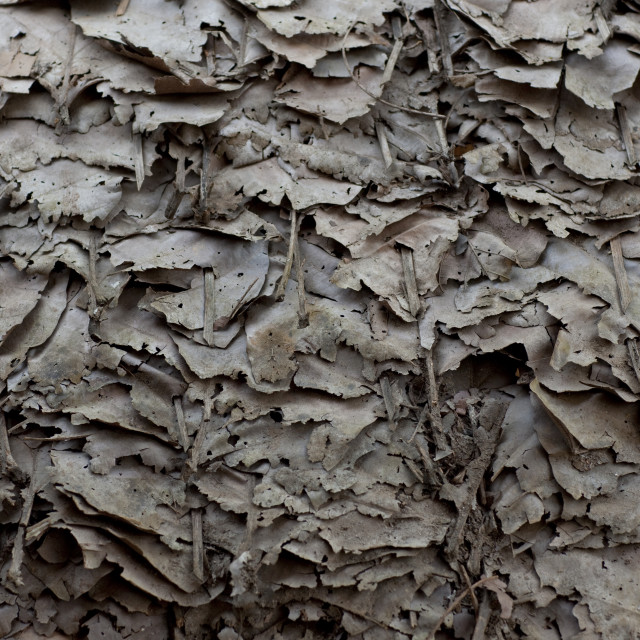 """Leaves roof, Mae soi-u karen village, Thailand"" stock image"