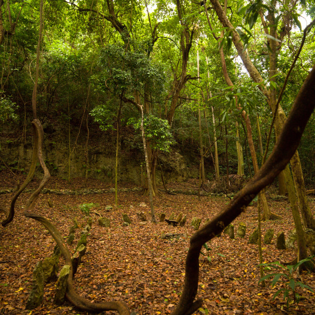 """Amelbati site of former cannibal ceremonies, Malampa Province, Malekula..."" stock image"