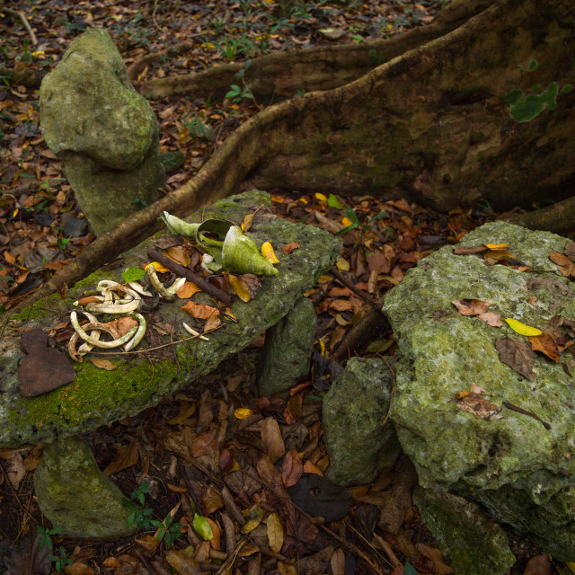 """Sacrifice table in Amelbati cannibal site, Malampa Province, Malekula Island,..."" stock image"