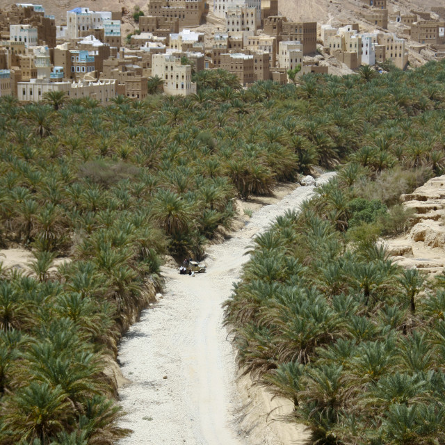 """""""Prospect Of Wadi Doan Covered By Palm Trees And Buildings, Hadramaut, Yemen"""" stock image"""