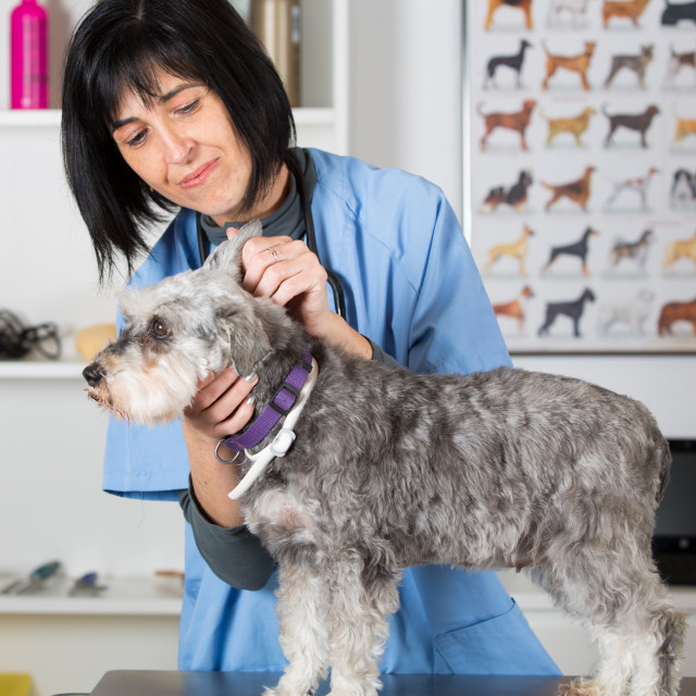 """Veterinary clinic"" stock image"