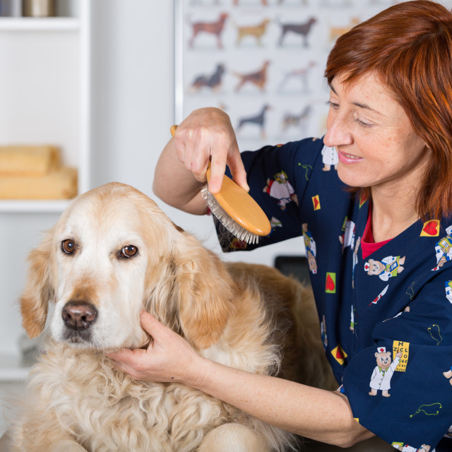 """Canine hairdresser"" stock image"