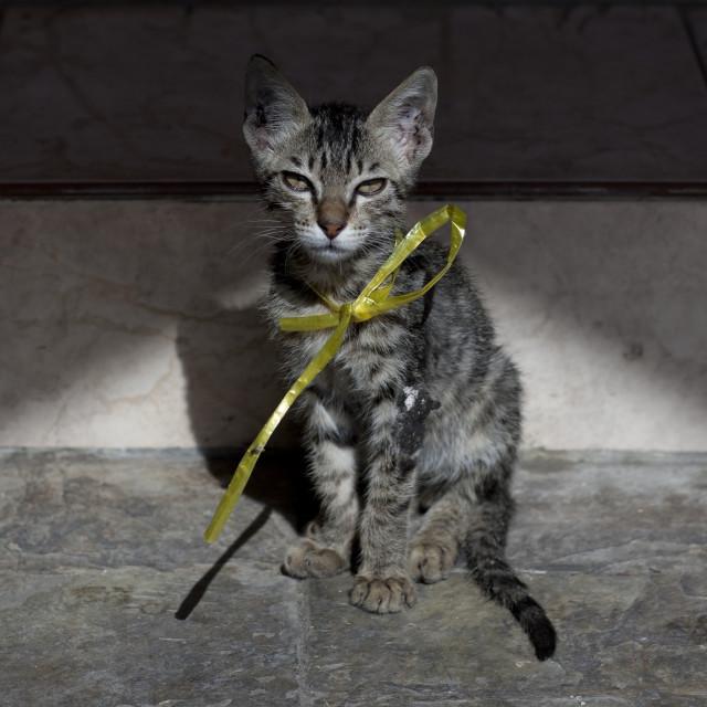 """""""CAT IN OMAN"""" stock image"""