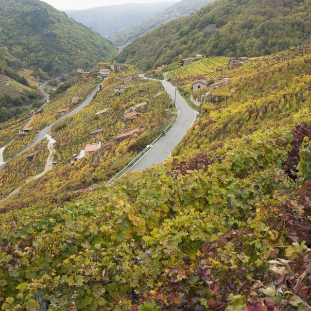 """""""spanish vineyard"""" stock image"""