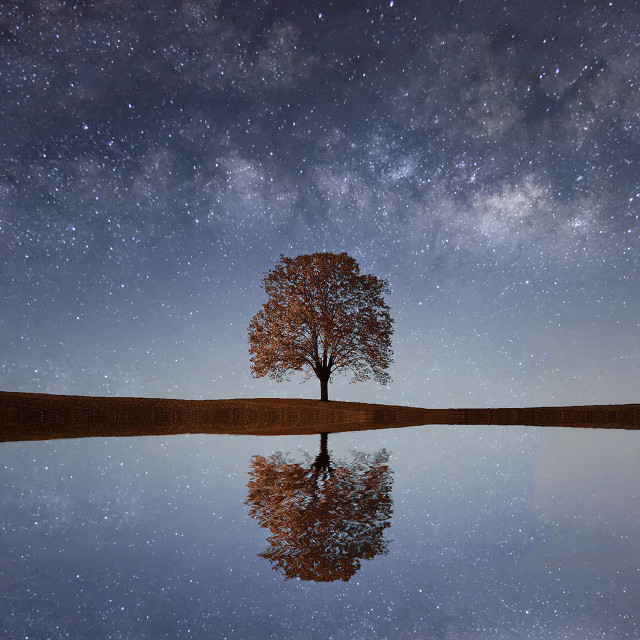 """Milky Way over a lonely single tree"" stock image"