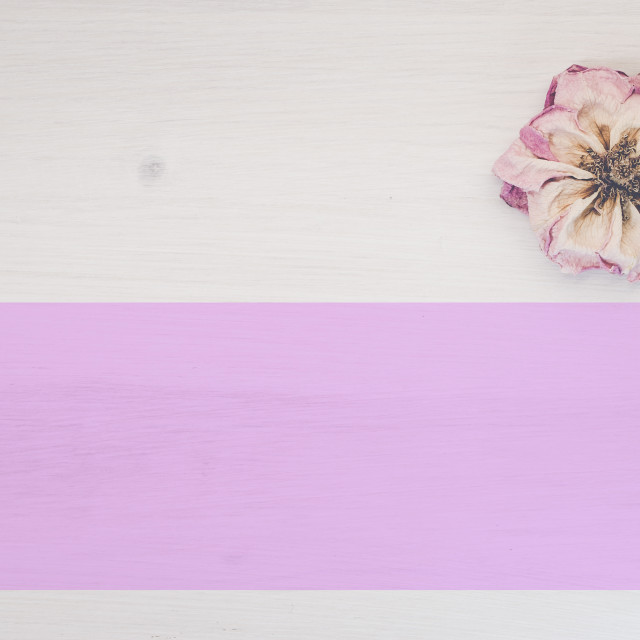 """flowers still life backdrop"" stock image"