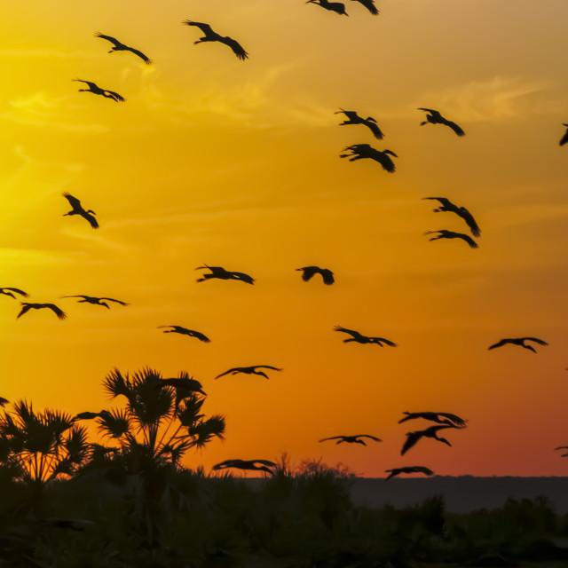 """Africa, Kenya, birds at sunset"" stock image"