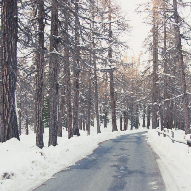 """""""wintertime forest"""" stock image"""