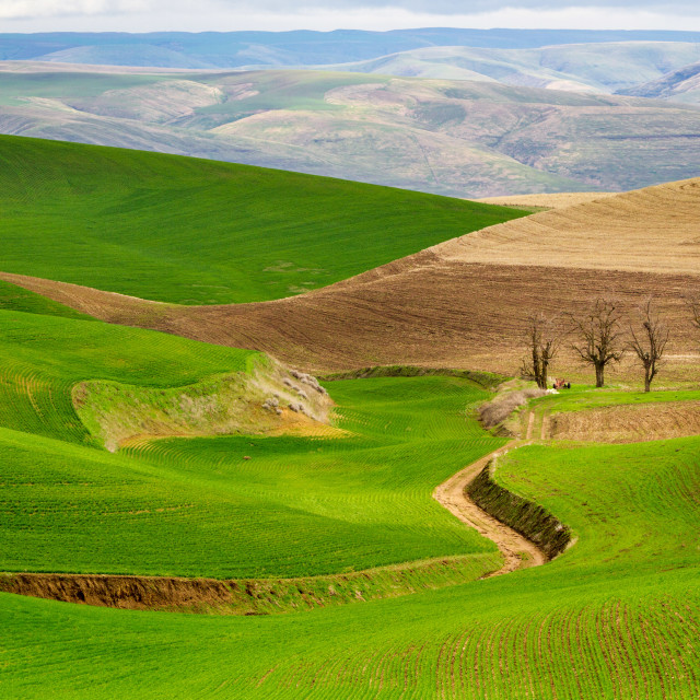 """Rolling Palouse"" stock image"