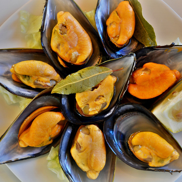 """""""Mussel Delight"""" stock image"""