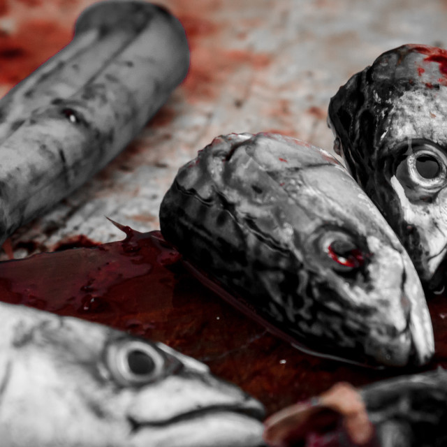 """""""Bloody fish heads"""" stock image"""