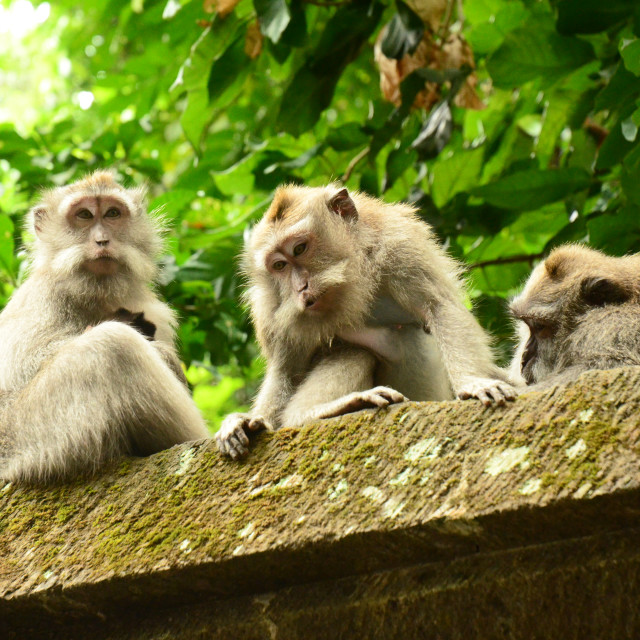 """Monkeys"" stock image"
