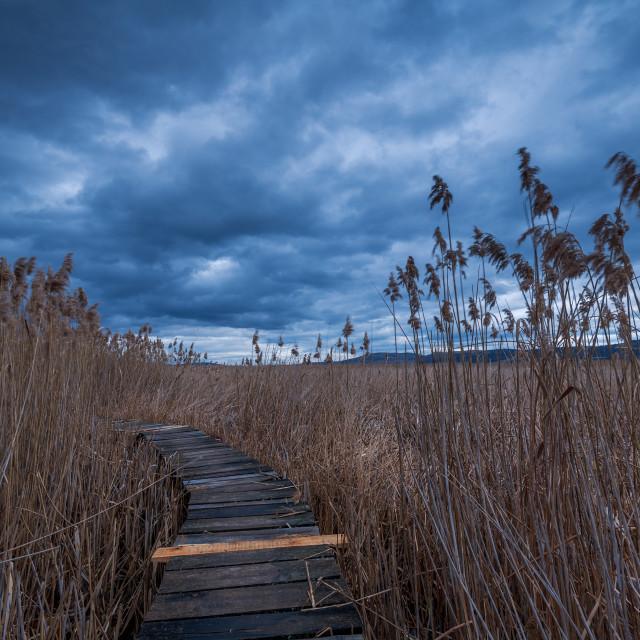 """""""Swamp walking path."""" stock image"""