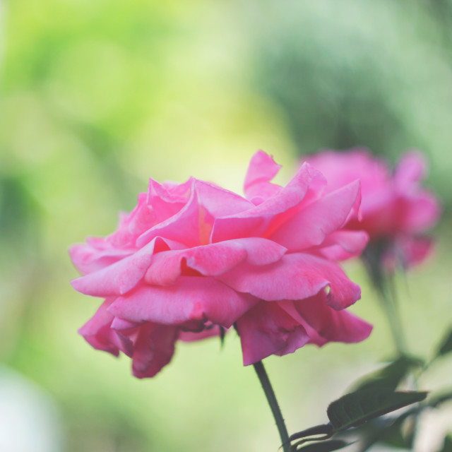 """soft 