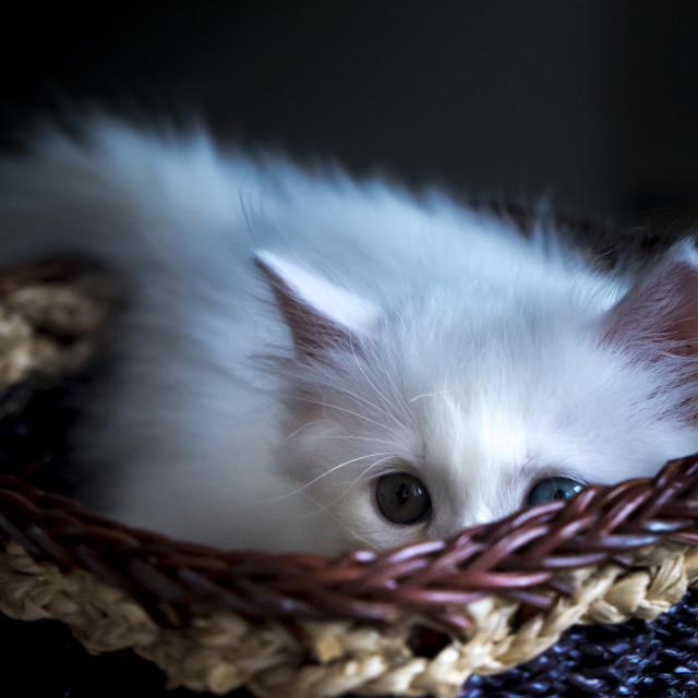 """""""Cute kitten is in a basket"""" stock image"""