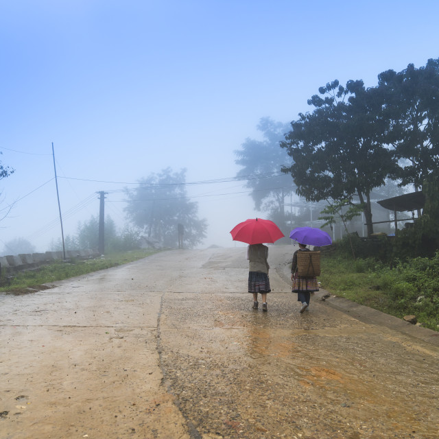 """rural women walk with red umbrella in the early morning mist in Y Ty, Lao Cai Province, Vietnam"" stock image"