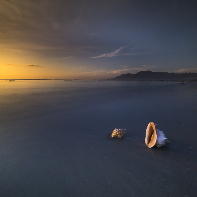 """Seashell on the sand at dawn"" stock image"