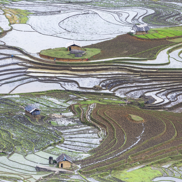 """Beautiful picture of terraced rice fields in a spilling water season in the northwestern part of Lao Cai province, Vietnam"" stock image"