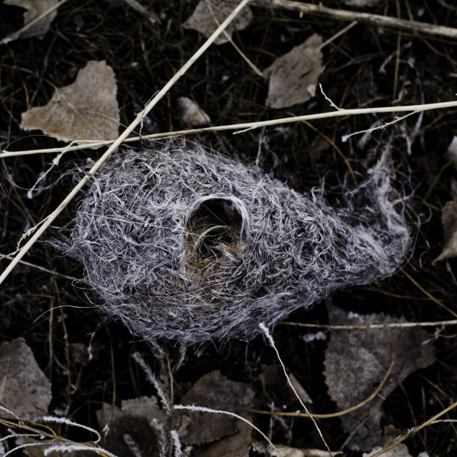 """""""A hanging bird's nest lies on the ground"""" stock image"""