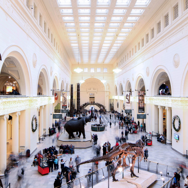 """Field Museum Chicago"" stock image"
