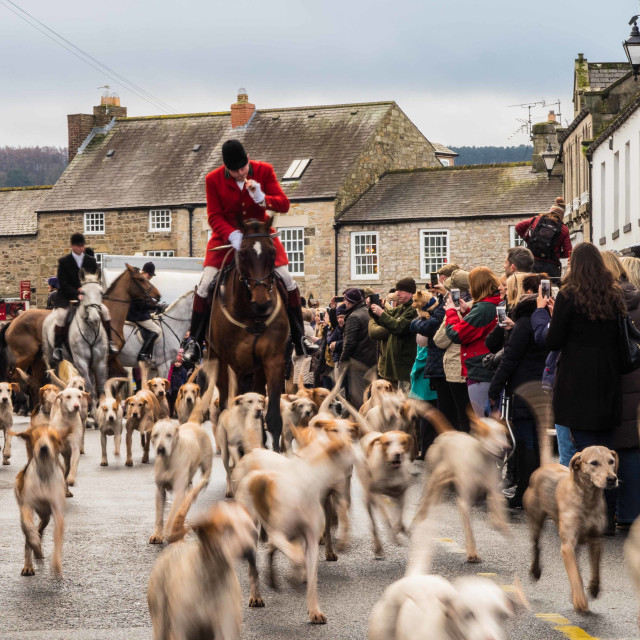 """Boxing Day Hunt III"" stock image"
