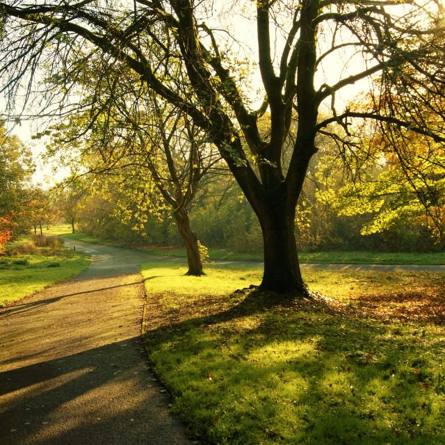"""Autumn Landscape."" stock image"