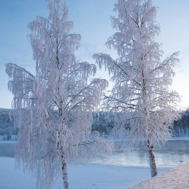 """""""Frost in trees"""" stock image"""