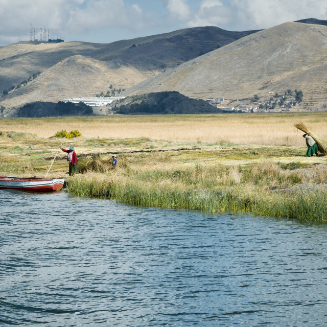 """Aymara family collect reed for building Uros floating islands"" stock image"