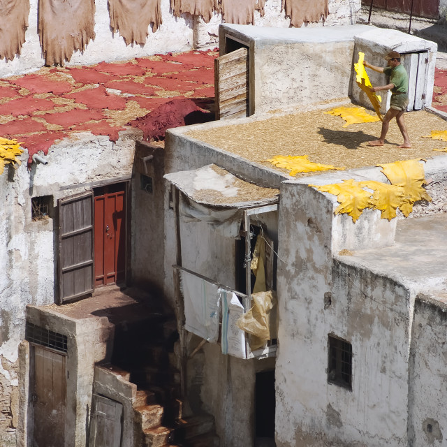"""""""Tanner drying hides on the roof top of the Tannery in Fes el Bali"""" stock image"""