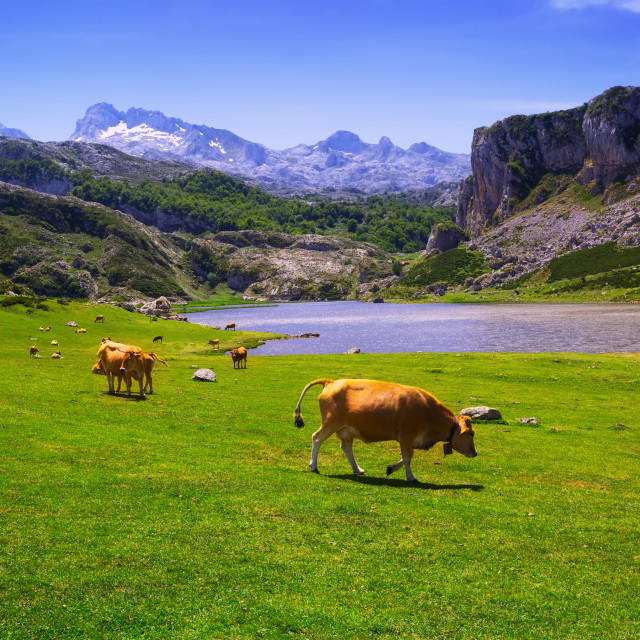 """""""landscape with lake and cows"""" stock image"""