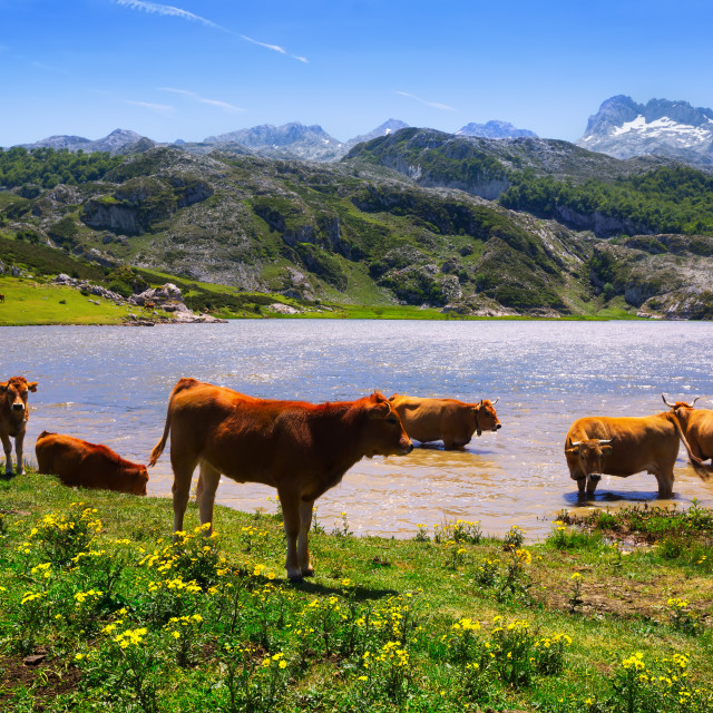 """""""mountains landscape with lake and cows"""" stock image"""