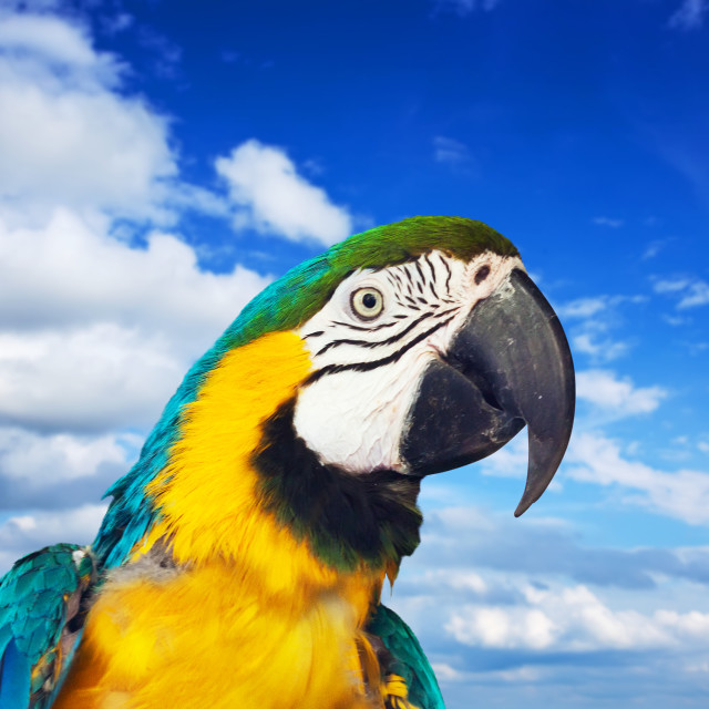 """""""macaw papagay against sky"""" stock image"""