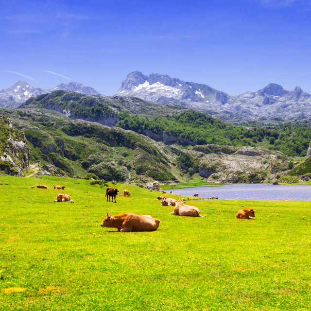 """""""landscape with lake and pasture"""" stock image"""