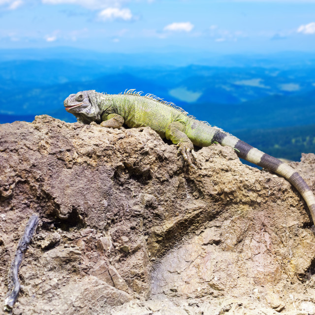 """""""Green lizard at wildness"""" stock image"""