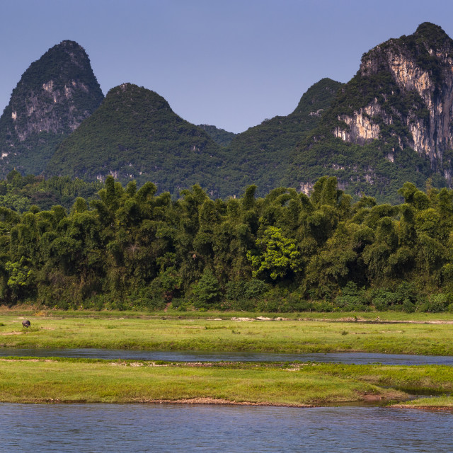 """View of the Li River with water buffalo and the tall limestone peaks in the background near Yangshuo in China, Asia; Concept for travel in China and visit China"" stock image"