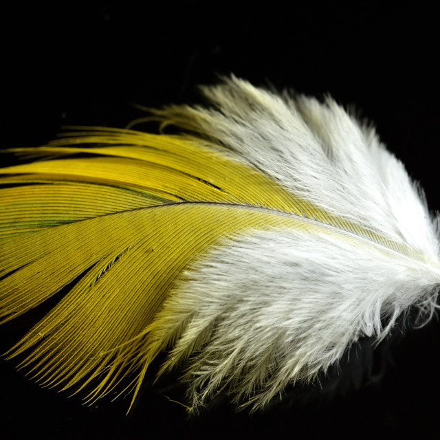 """Parrot feather"" stock image"