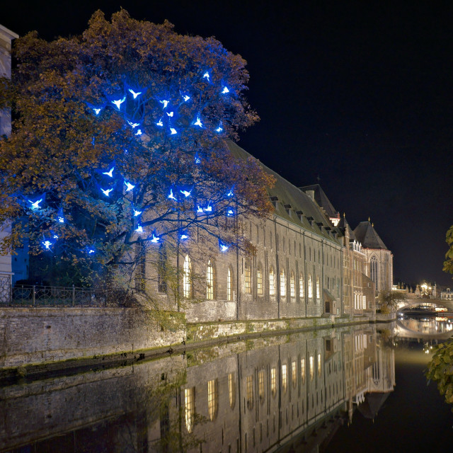"""Firefly lights in Gent"" stock image"