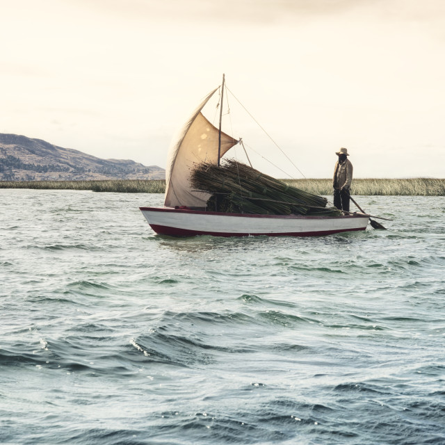 """""""Boatman bringing tortora reeds used for the construction and repair of houses and boats by the local community"""" stock image"""