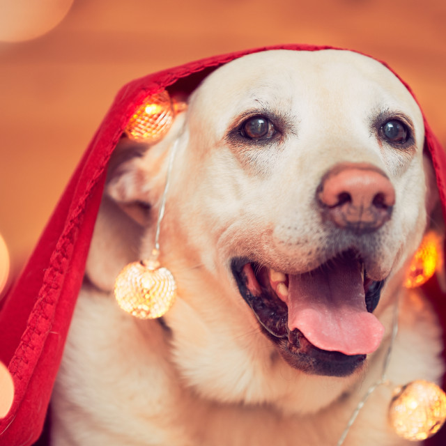 """Celebrations with cute dog"" stock image"