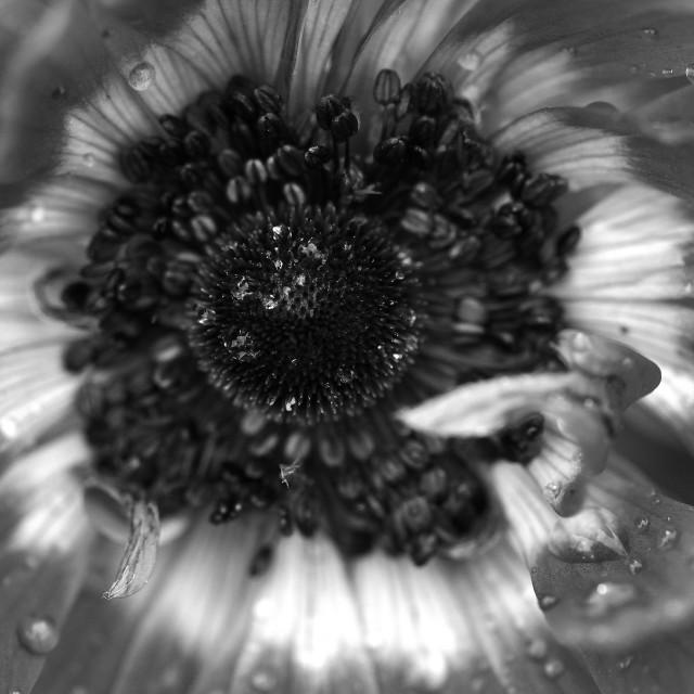 """""""Flower centre"""" stock image"""