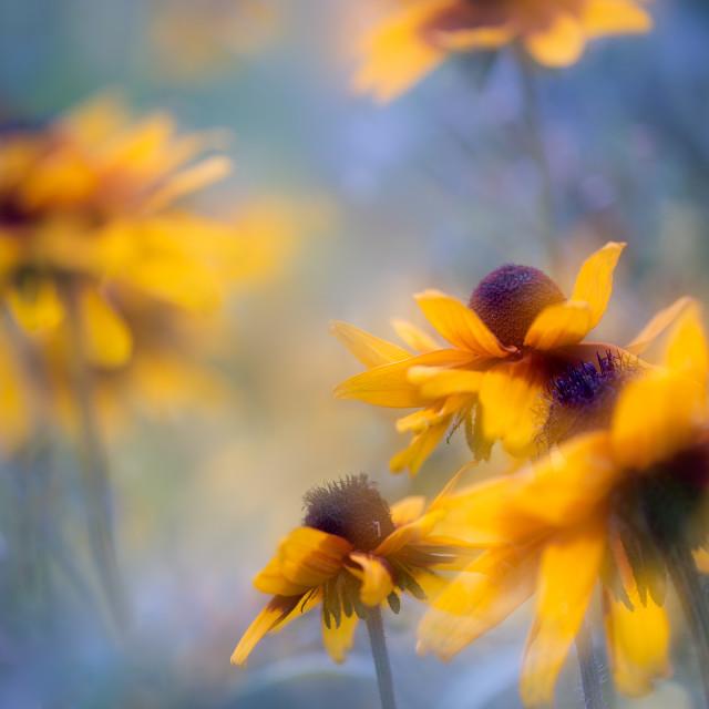 """""""The garden dreams"""" stock image"""