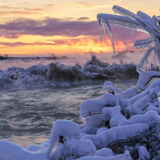 """""""Icy Tree Sunrise 2"""" stock image"""
