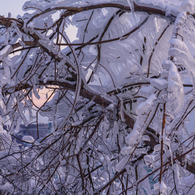 """Ice Covered Branches"" stock image"