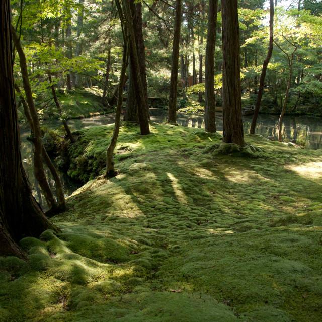 """Moss Gardens, Kyoto, Japan"" stock image"