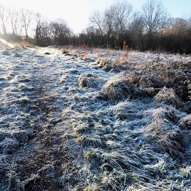 """""""Morning Frost"""" stock image"""